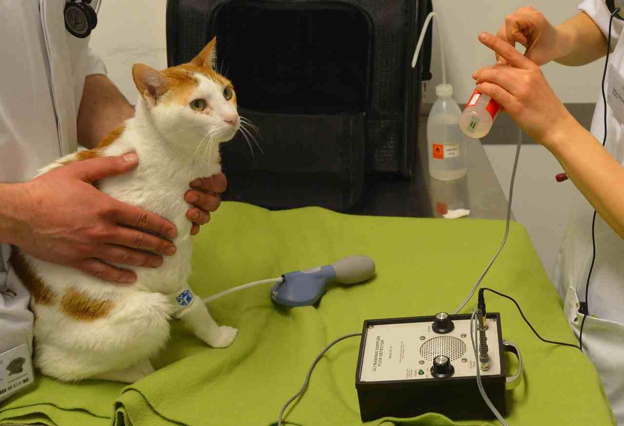 Farmaci umani animali
