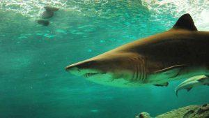 fiumicino, pescatore salvato dall'attacco di uno squalo