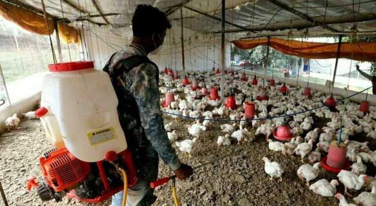 h10n3-influenza-aviaria-cina