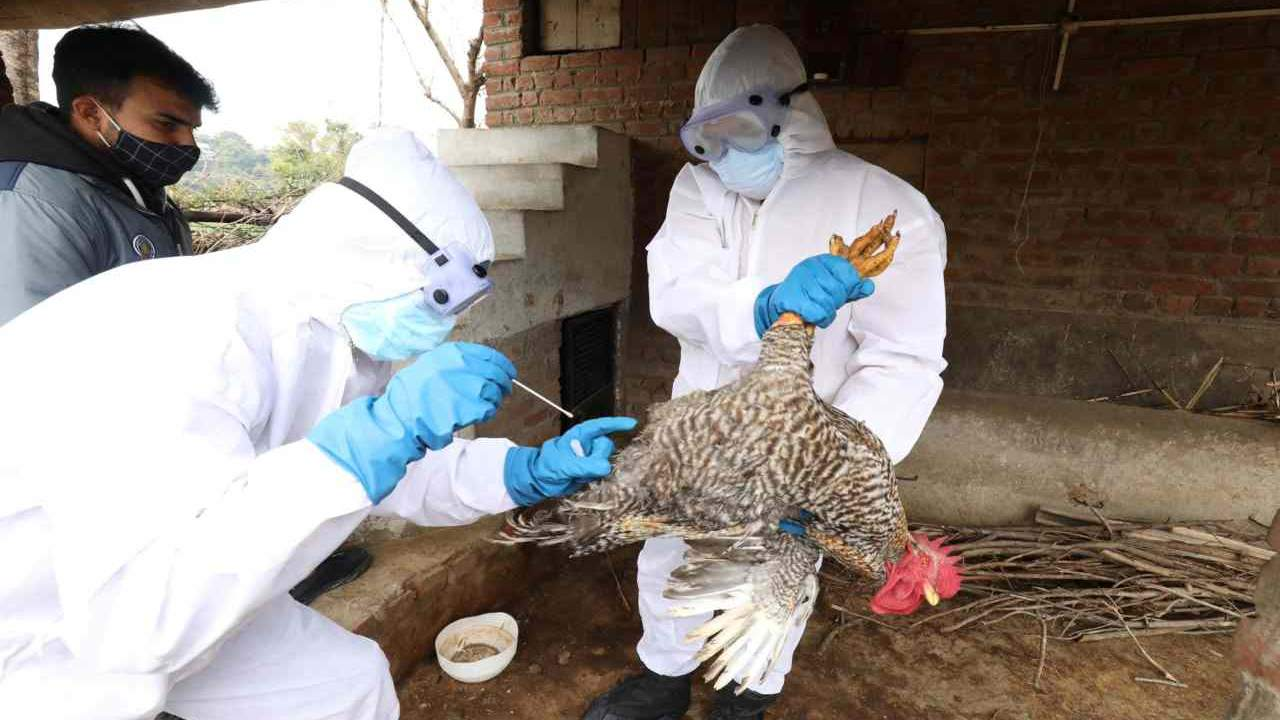 influenza-aviaria-H10N3