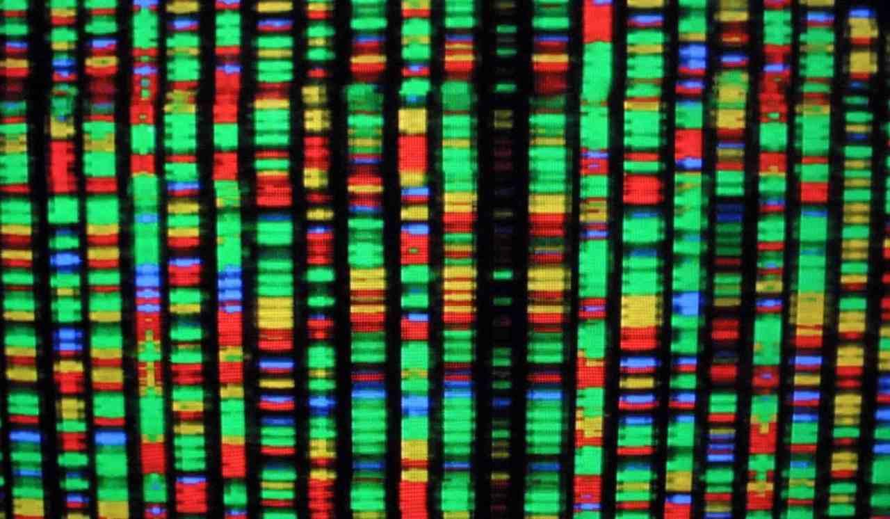 gnoma umano